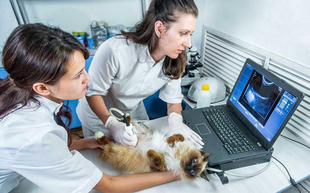 Срочный вызов ветеринарного врача в районе Тимирязевский