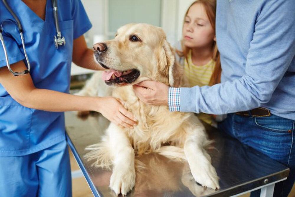 Скорая ветеринарная помощь в САО Тимирязевский Московской области