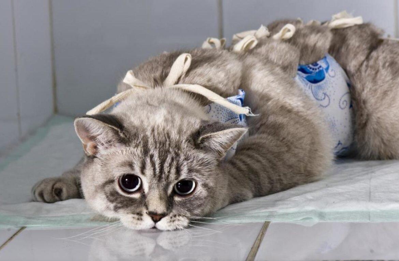 Стерилизация кошки в районе Тимирязевский