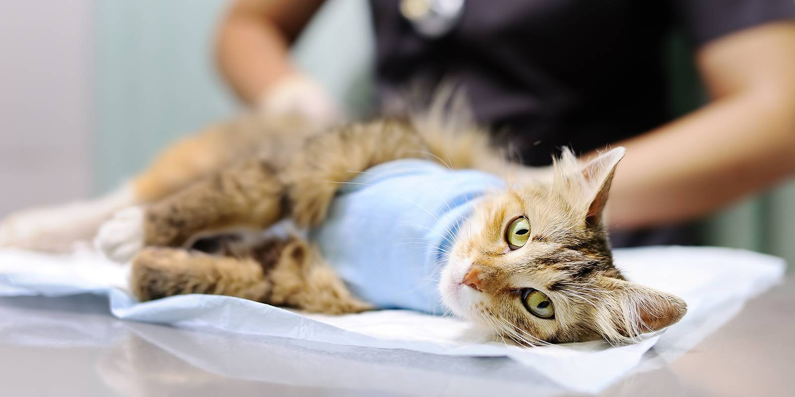 Стерилизовать кошку в САО районе Тимирязевский