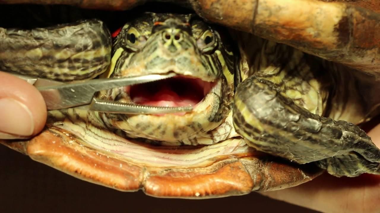 Лечение рептилий в районе Тимирязевский