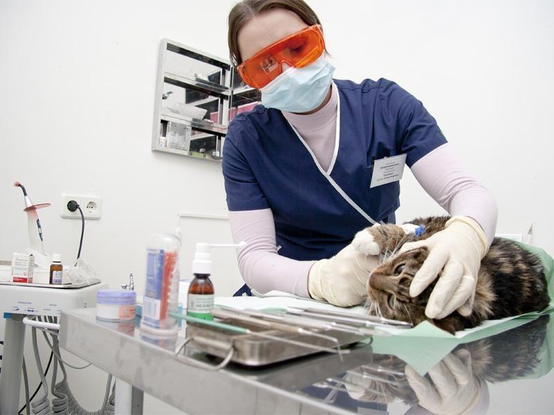 Стоматолог для собаки, кошки в районе Тимирязевский